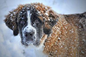 Hund im Schnee Tierschutverein Woflsberg