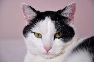 Katze Lisi Tierschutzverein Wolfsberg