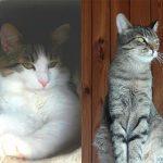 Tierschutzverein Wolfsberg Beitragsbild Katze Brain und Pinki